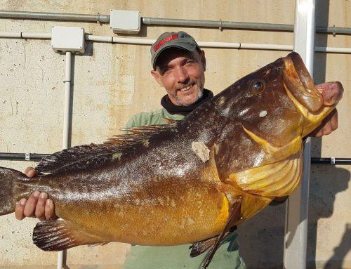 Captura de un Mero de 15,7 kilos pescado con pata de pulpo